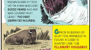 """1. Scientists studying remains at a prehistoric cemetery in Japan have discovered the world's oldest known shark attack victim: a man who lived 3,000 years ago and was covered in at least 790 deep, serrated injuries. 2. Sleeping Beauty - A 2,000-pound bison caused a traffic jam in Yellowstone National Park on August 3, 2021, after it decided to take a nap on the road. 3. Grace Buesing of Slayton, Minnesota, found a Cheeto shaped like the Pillsbury Doughboy, complete with his hat, waving hand, and """"li'l belly."""" Submitted by Grace Buesing, Slayton, Minnesota."""