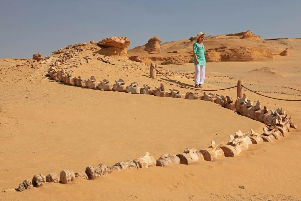 Whale skeleton in Egypt