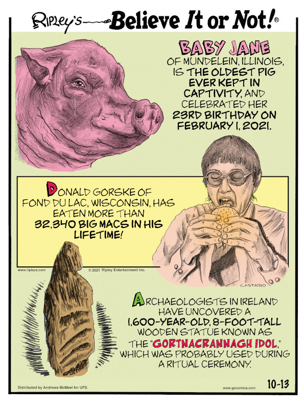 """1. Baby Jane of Mundelein, Illinois, is the oldest pig ever kept in captivity, and celebrated her 23rd birthday on February 1, 2021. 2. Donald Gorske of Fond du Lac, Wisconsin, has eaten more than 32,340 Big Macs in his lifetime! 3. Archaeologists in Ireland have uncovered a 1,600-year-old, 8-foot-tall wooden statue known as the """"Gortnacrannagh Idol,"""" which was probably used during a ritual ceremony."""