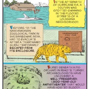 1. In the aftermath of Hurricane Ida, a dolphin was spotted swimming in the flooded streets of a Louisiana neighborhood. 2. Visitors to the Nandankanan Zoological Park in Bhubaneswar, India, had to evacuate after a tiger named Suraj temporarily escaped from its enclosure. 3. Buried beneath a fig orchard in remote Turkey, archaeologists have uncovered a well-preserved, 1,800-year-old amphitheater that would have hosted bloody battles and held up to 20,000 spectators! Submitted by Nate Westbury, Minneapolis, MN.